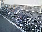 Cyclecrush